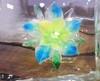 Iceflower07072
