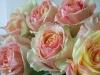 Rose0800529