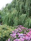 Leidsepleinboom0807