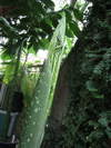 Ldyoung080801