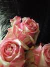 Rosecandy0809