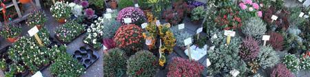 Lindengrachtmarkt20111011