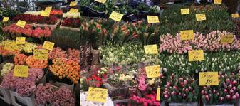 Lindenmarkt12012101