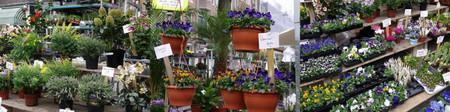 Lindenmarkt20120311