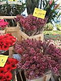Lindenmarkt20120306