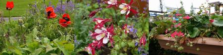 Floriade201206bloemen03_2