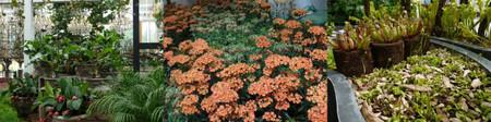 Floriade201206green06