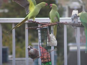 Bird20121