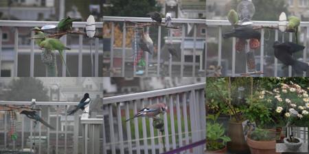 Bird20122