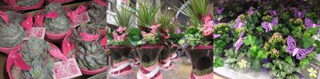 Aalsmeer1301plants03