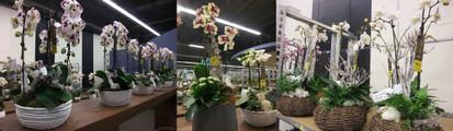 Aalsmeer1301plants04