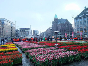Tulipday201301
