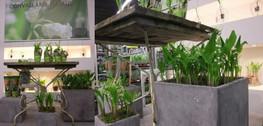 Aalsmeer1302plants04
