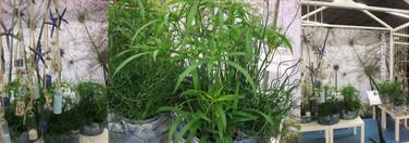 Ws1305plants03_2