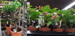 Ws1305plants16