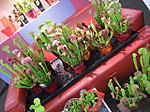 Ws1307plants01