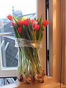 Tulipday201406