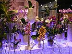 Floralien2014orchid01