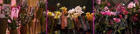 Floralien2014orchid02