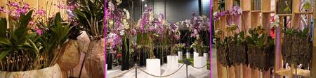 Floralien2014orchid03
