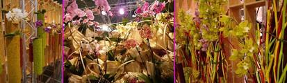 Floralien2014orchid04