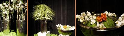 Floralien2014life1007