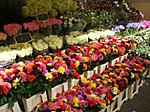 Lindengrachtmarkt201409