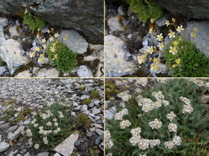 Summer201508gornergrat11