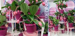 Ws201601plants05