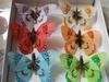 Butterfly070603