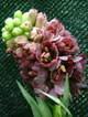 Fritillariapersicablack2006