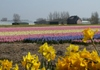 Hollandrob070412