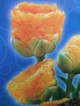 Hollandtulip07041_1