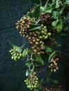 italianberry1