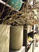 Magnolia07011_3