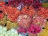 Roses070126