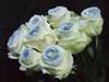 Rosesnowblue1